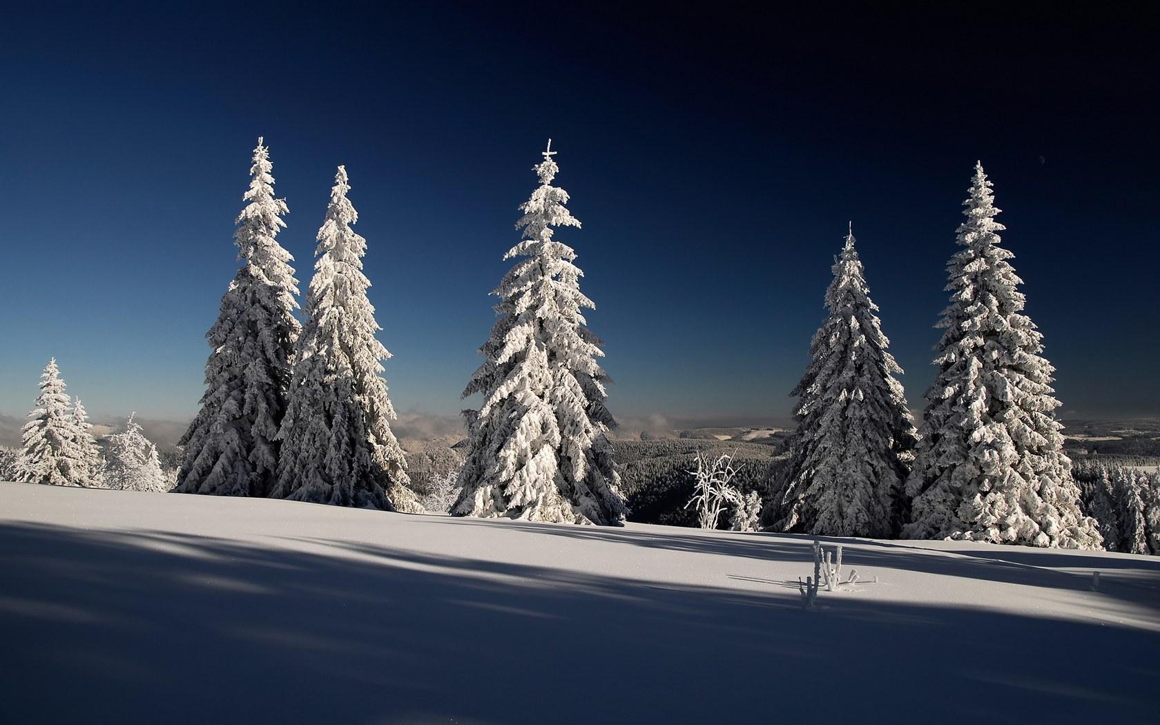 firtrees_hoarfrost_snow_shadows_branches_gray_hair_sun_dark_blue_sky__x