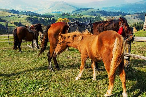 Карпати, прогулянка на конях